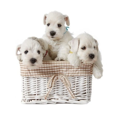 Hundebabies