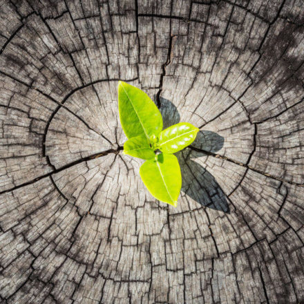 Die Diskussion um den Purpose und dessen Auswirkungen auf das Employer Branding