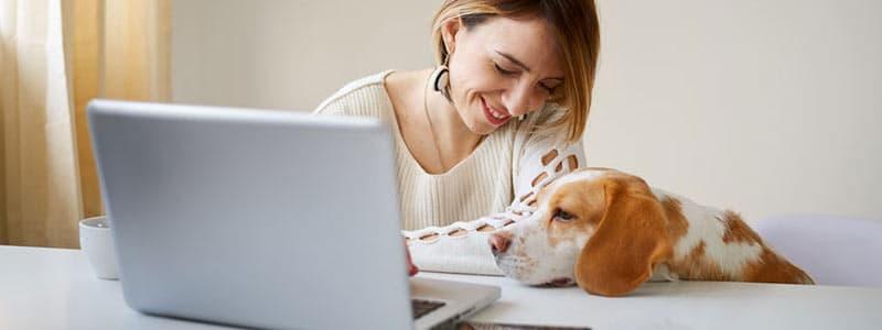 Titelbild: Bürohund im Employer Branding