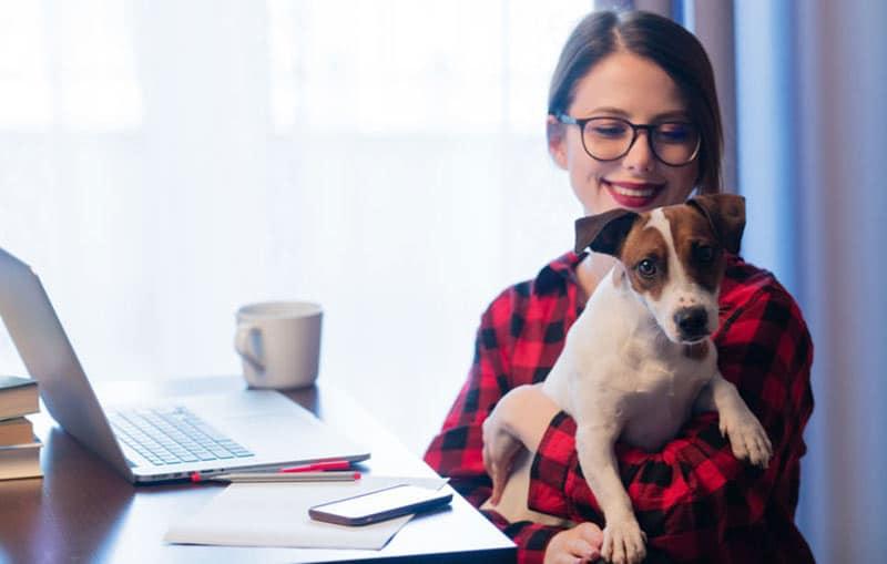 Bild: Bürohund auf dem Schoß am Arbeitsplatz